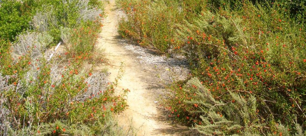 Wildflowers along hiking trail.